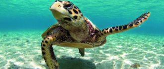 Животные долгожители: фото, список, виды и особенности