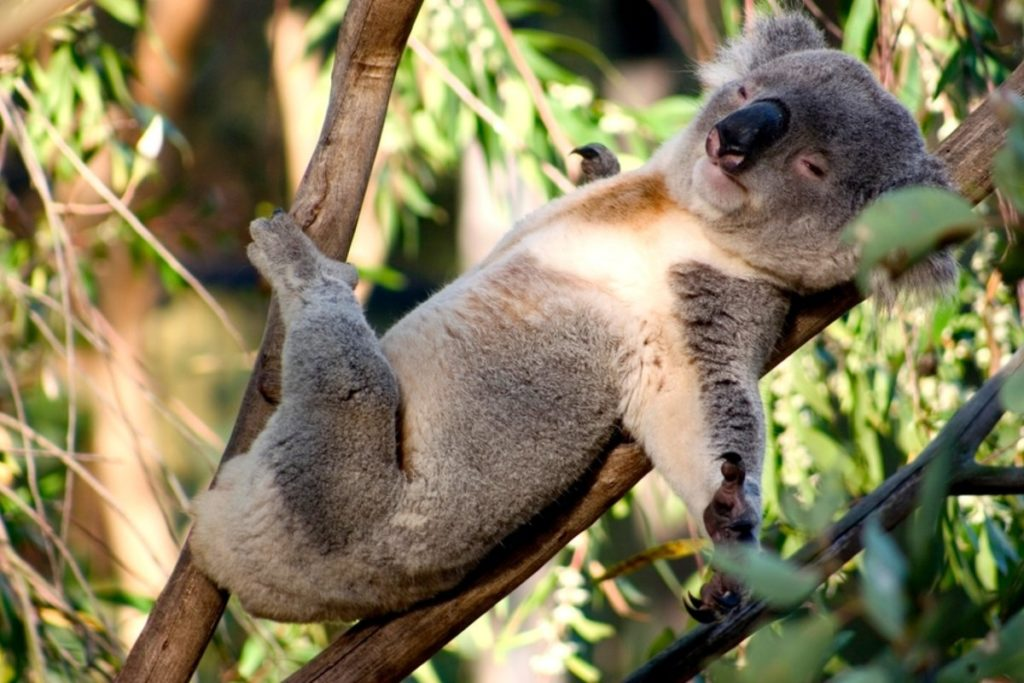 Когда тебе некуда спешить - Десятка самых ленивых животных на Земле