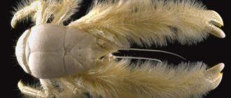 Странные животные: список, названия видов, описание, особенности
