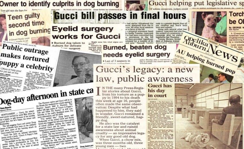 Гуччи: История собаки, которая вошла в историю, как борец за права животных