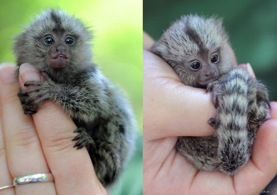 Миниатюрные зверьки: Самые маленькие животные в мире