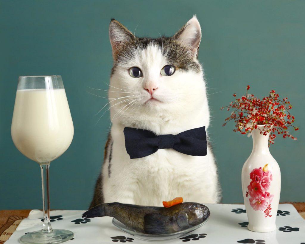 Котан входит в здание: Что сделать в первую очередь когда в квартире появляется кот