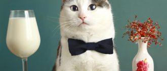 Как завести кота: необходимые вещи, подготовка, рацион