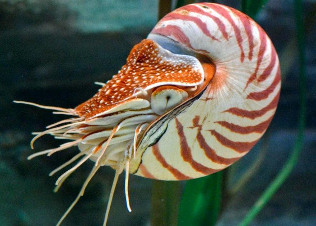 Самые древние животные из живущих на земле
