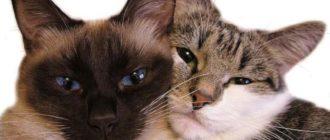 Кошки-метисы: результаты скрещивания, фото, особенности