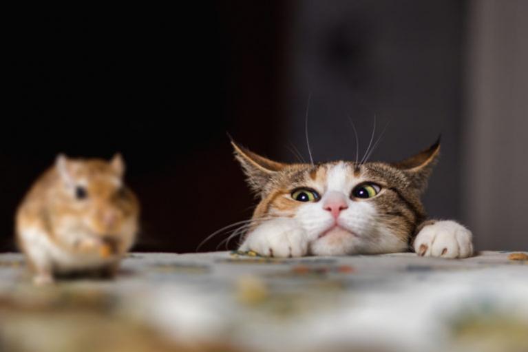 Круче любой мышеловки - Какая кошка лучше всего ловит мышей?