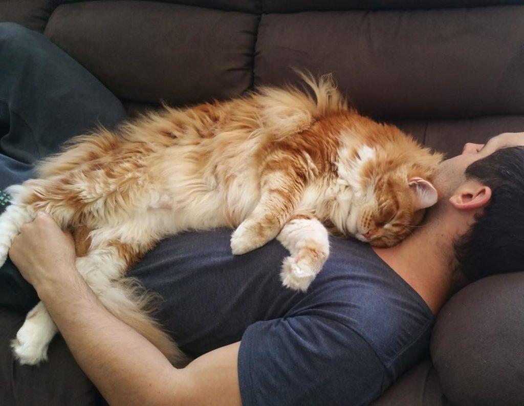 """Биоэнергетический сенсор """"Кот"""": Где любят спать кошки и почему?"""