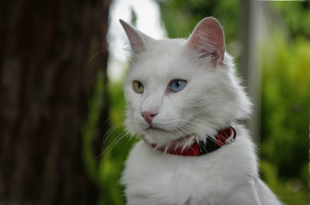 Самые редкие и уникальные породы кошек в МИРЕ
