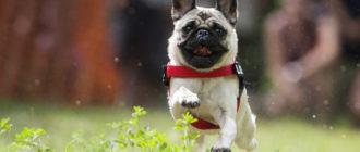 Маленькие пушистые собаки: фото, список пород, особенности