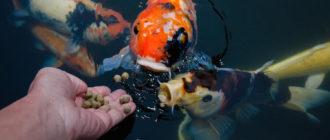 Аквариумная рыбка: фото, внешний вид, описание и особенности
