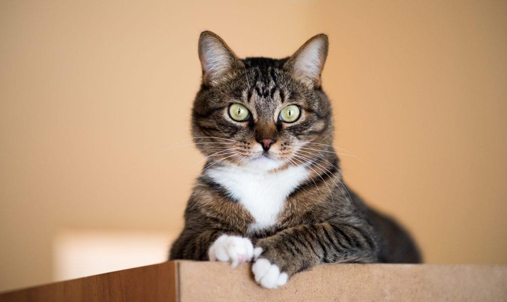Сложней, чем в женщинами! Как завоевать доверие кошки?