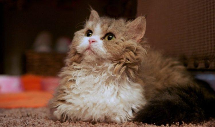 7 вещей, которые поймут только обладатели кошек