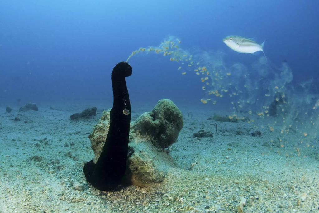 Морской огурец и неприличные ассоциации