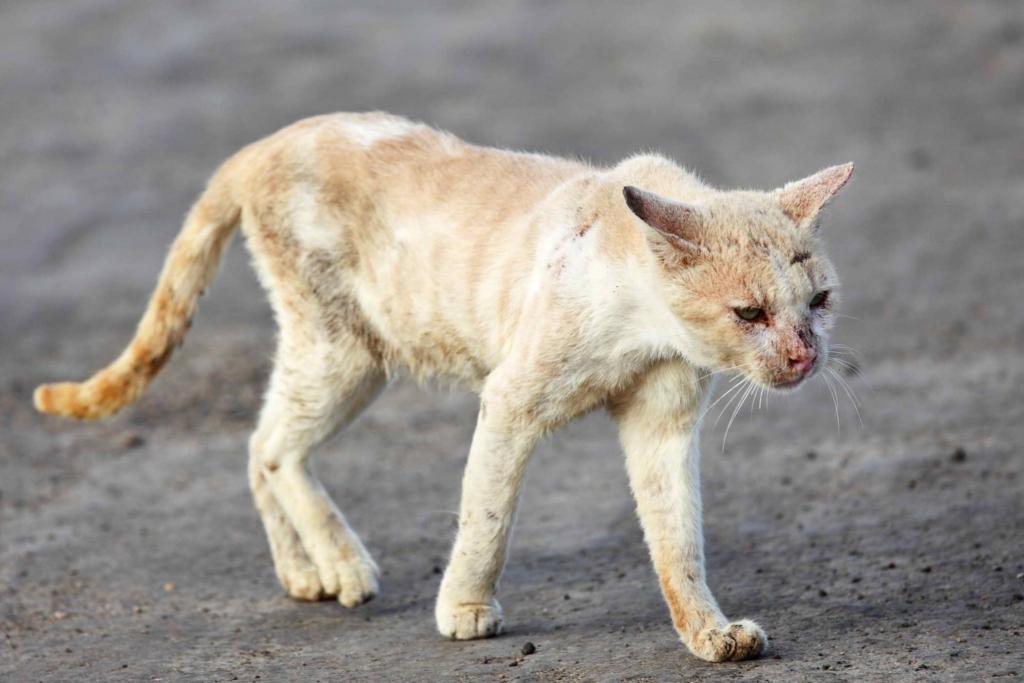 Признаки скорой кончины вашей кошки и почему перед этим они уходят из дома