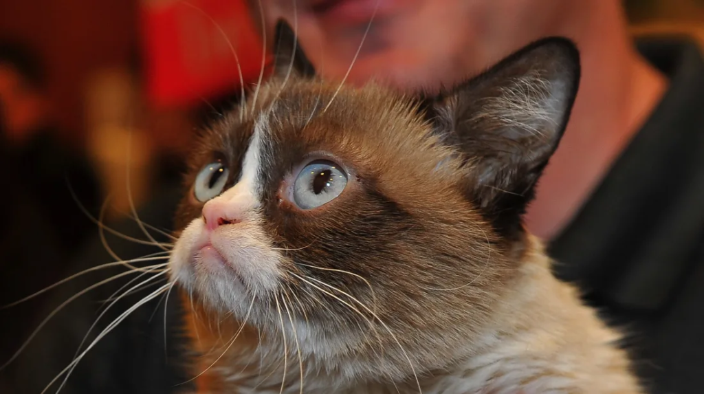 Богатые зверюги: 10 домашних животных, которые живут лучше людей