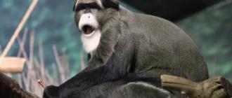 Самые дорогие животные в мире: фото, названия, история