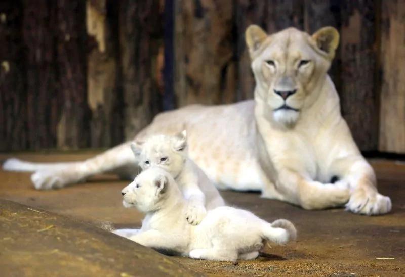 Дороже золота! ТОП 16 самых дорогих животных в мире