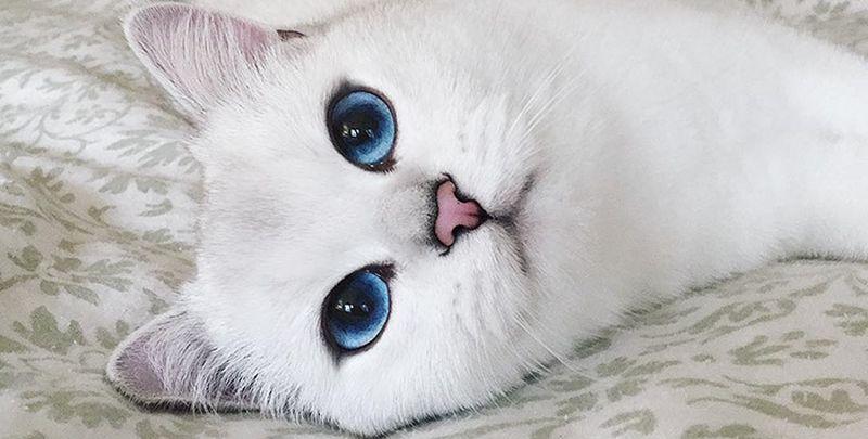 Чего хочет ваша кошка?