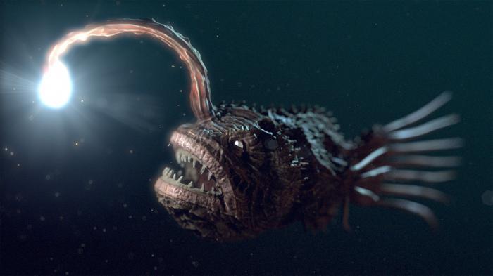 Топ 5 Самых страшных животных в мире!