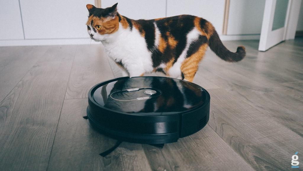 Кошачьи фобии: Почему кошки боятся пылесоса?