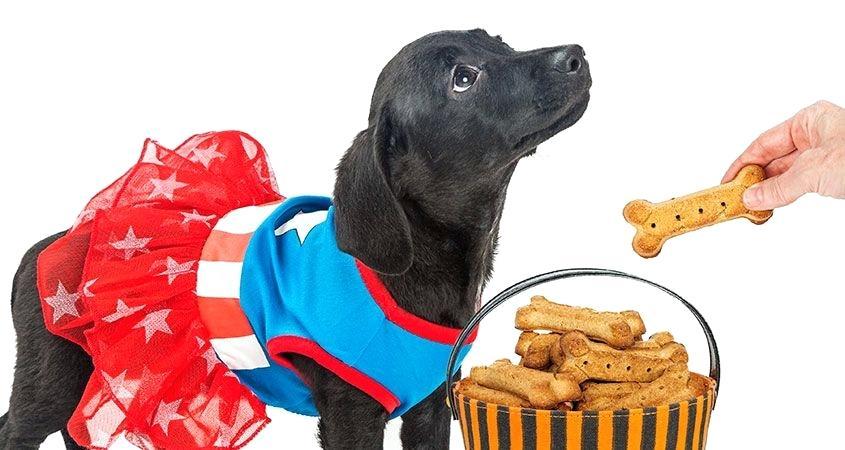 Почему собакам нельзя солить еду: причины и возможные последствия для питомца