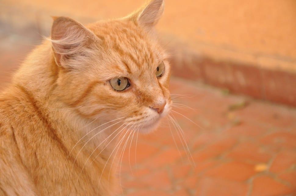 """""""А я рыжий что-ли?"""" Рыжие коты - кто это такие и в чем их секрет?"""