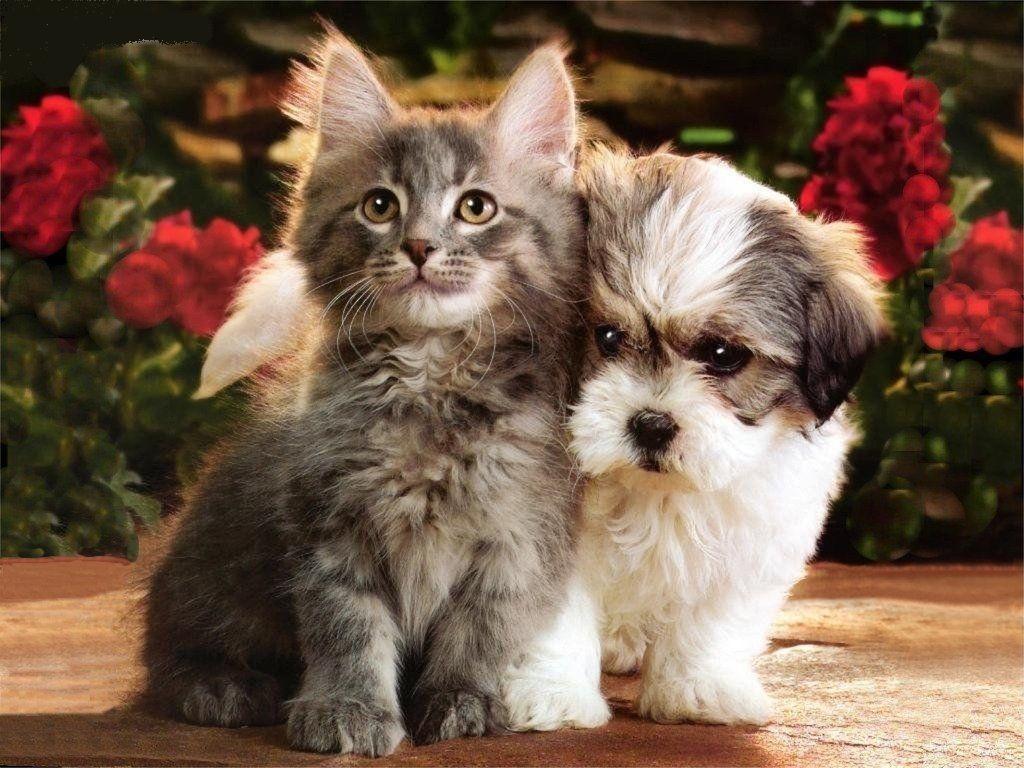 Обои на телефон с собачками и кошками