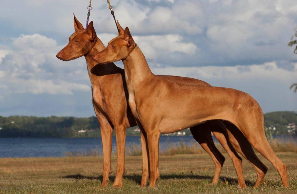 Топ - 5 самые необычные породы собак в мире