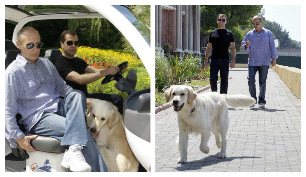 Собаки Медведева: интересные факты о четвероногих друзьях премьер-министра