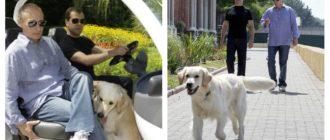 Собаки Медведева: фото, порода, история и особенности