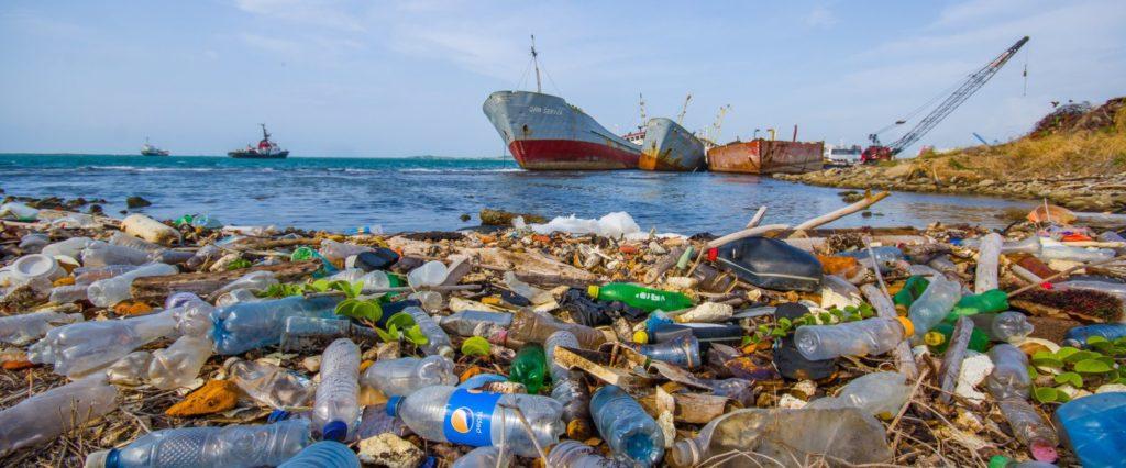 Экологическая катастрофа: Китов убивает пластик