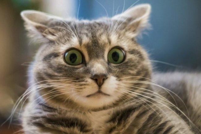Тайная жизнь кошек: Что делают котики пока вас нет дома?
