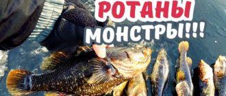 Ротан: фото рыбы, чем опасна для экологии, история