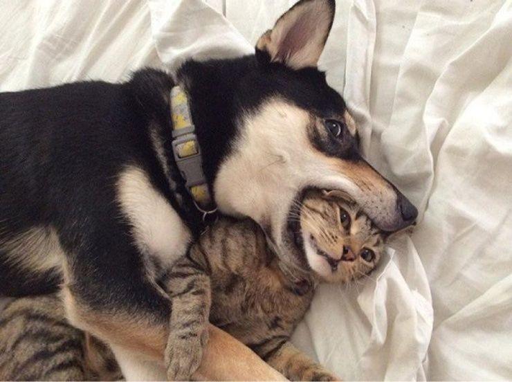 Вечная вражда: Почему собаки кидаются на кошек?