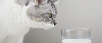 Кошкам вредно молоко: причины, последствия, что делать
