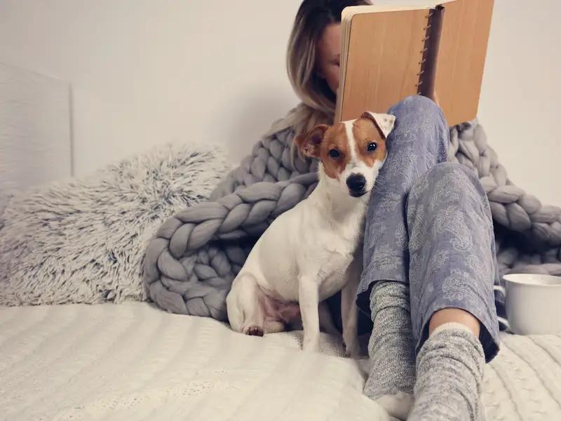 Топ 5 очень странных привычек у собак