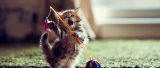 Игры для кошек: идеи, способы, игрушки, как играть