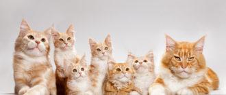 Питомник для кошек: помещение, оборудование, как выбрать