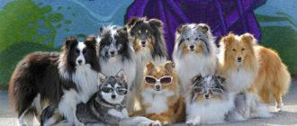 Популярные породы собак в разных странах: названия и особенности