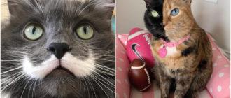 Необычные кошки: фото, породы, внешний вид, история, особенности