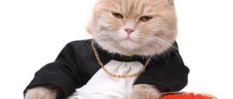 Дорогие породы кошек: названия, внешний вид, стоимость