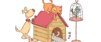 Неприхотливые домашние животные: список, особенности, как выбрать