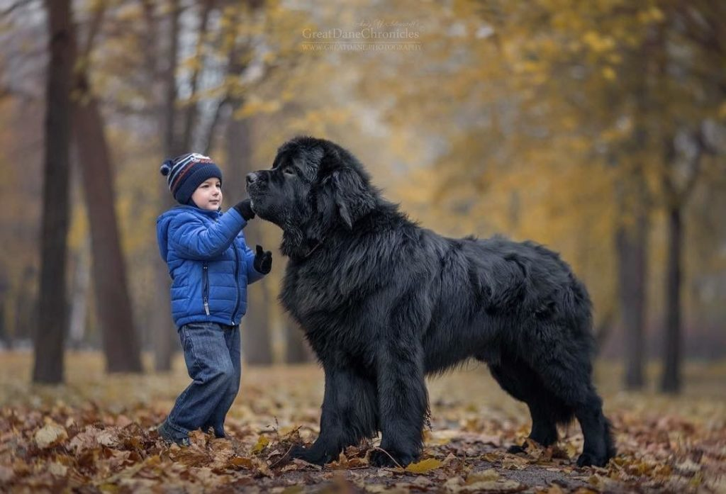 Собаки няньки - самые человеколюбивые и терпеливые к детям породы