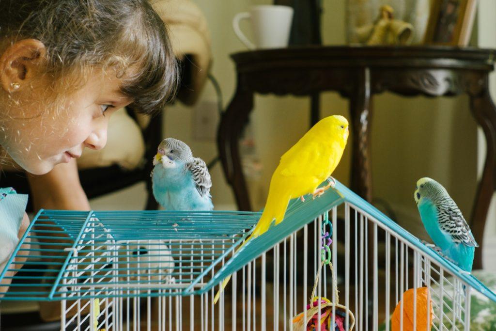 Чем ваших детей могут заразить домашние животные?