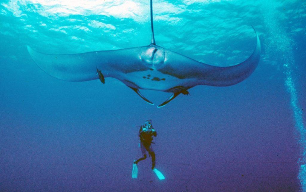 9 Самых крупных реально-существующих обитателей океана