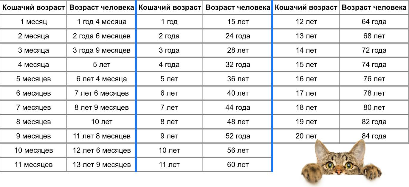 http://www.murlika.msk.ru/poleznoznat/img/skolko_koshke_let_tablica.jpg