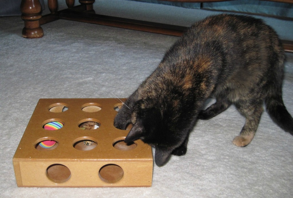 https://3milliondogs.com/blog-assets-two/2015/09/Ruby-puzzle-toy-1024x690.jpg