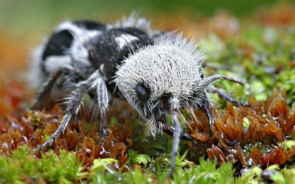 Топ 8 самых экзотических животных в МИРЕ