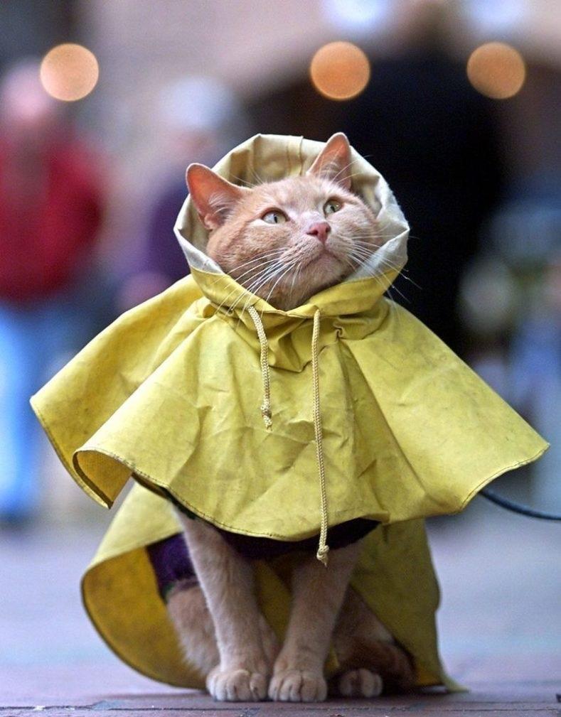 Одежда для кошек и котов - зачем она нужна и есть ли в ней смысл?