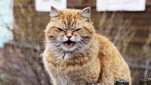 """50 Поразительных фактов о котиках, о которых очень редко пишут в """"интернетах"""""""